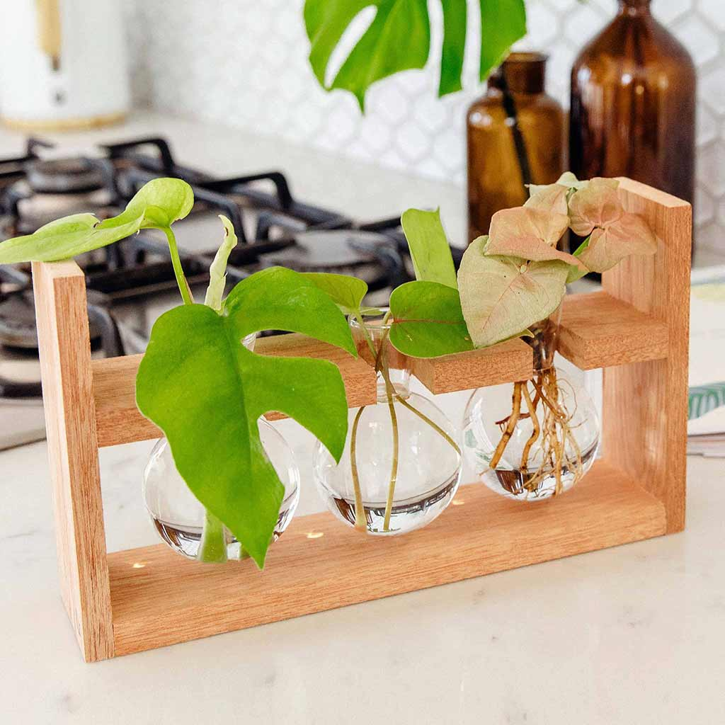 Cooper & Smith Plant Propagation Station Gift Guide